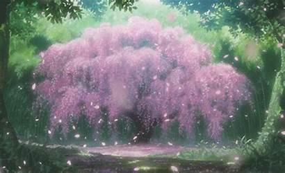 Cherry Blossom Anime Scenery Japanese Tree Blossoms