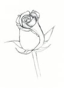 Closed Rose Bud Drawing