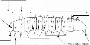 Label The Caterpillar Diagram Printout