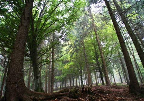 dati forestale il mondo forestale nel di ersaf ecco i dati sul