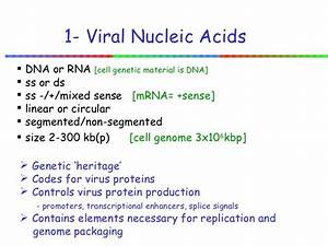 Elements Of Nucleic Acids Virology Week6
