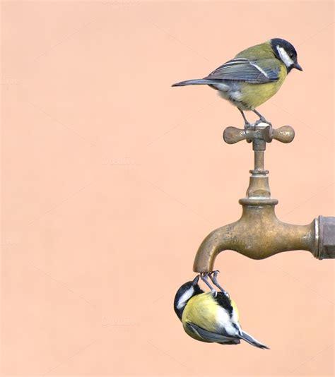 thirsty animal photos on creative market