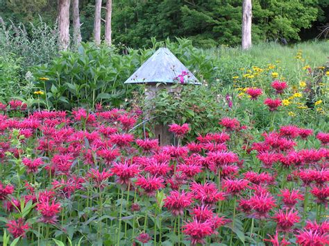 Country Garden Rustic Pinterest