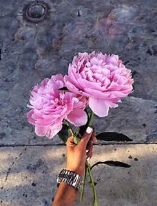 Langage Des Fleurs Pivoine : blairemartin1 flowers fleurs planter des fleurs et fleur jardin ~ Melissatoandfro.com Idées de Décoration