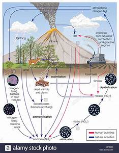Nitrogen Cycle Stock Photo  26673478