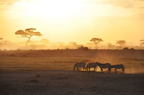 The Complete Guide to Safari - Condé Nast Traveler
