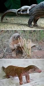10+ Crías de animales curiosos que seguramente no habías ...