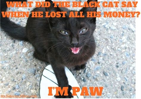 Halloween Cat Meme - halloween joke black cat meme 2 what did the black cat say when he lost all his money