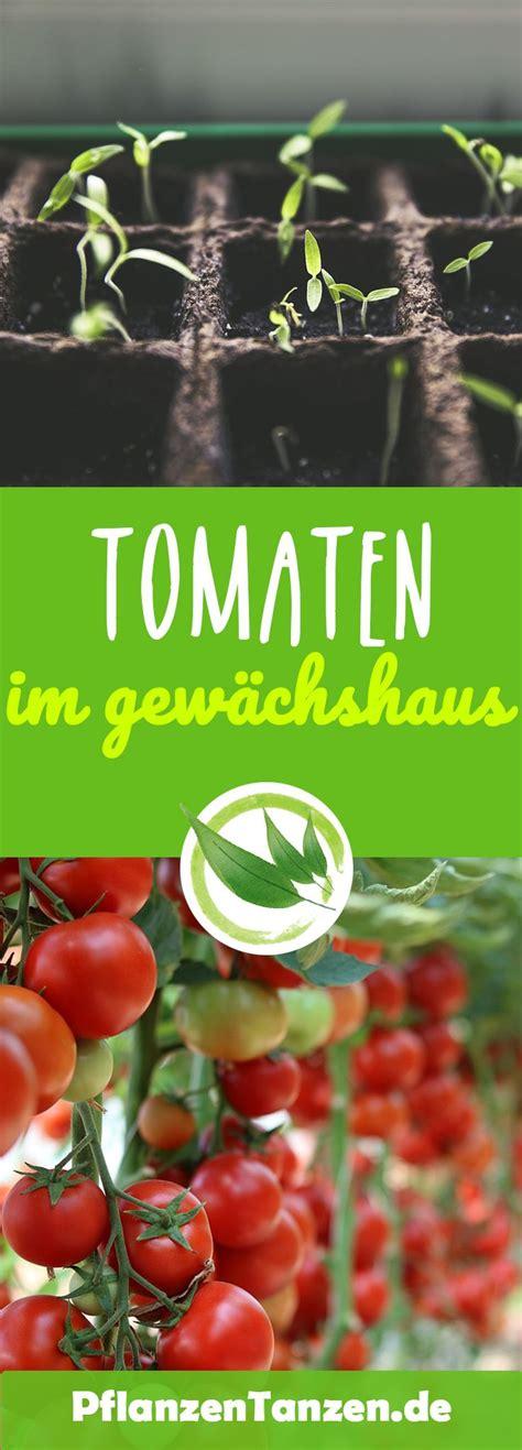 heizung für gewächshaus tomatenanbau im gew 195 164 chshaus 226 tipps tricks f 195 188 r gesunde pflanzen greenhouse tomaten