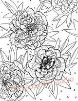 Coloring Peony Flower Peonies Drawing Flowers Adult Floral sketch template
