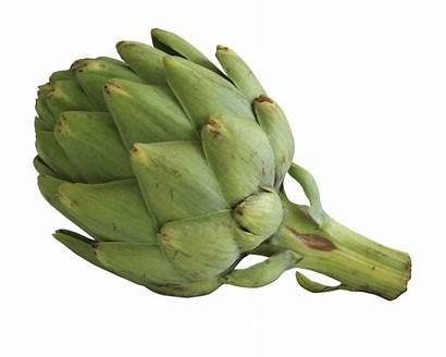 Artichoke Artichokes Transparent Vegetables Purepng Facts Pngpix