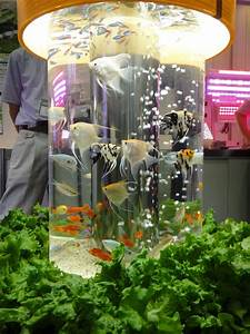Aquaponics kit turns fish waste into food for you News