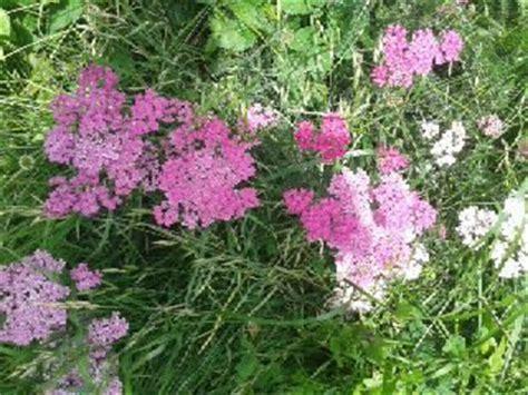 Duftpflanzen Für Die Wohnung by Haushalt Und Mehr Duftgarten Anlegen Duftpflanzen F 252 R