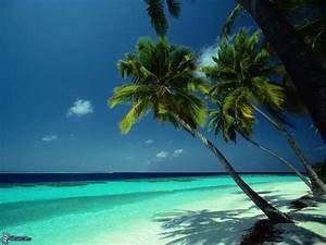 Bilder Meer Strand : palmen ber meer ~ Eleganceandgraceweddings.com Haus und Dekorationen