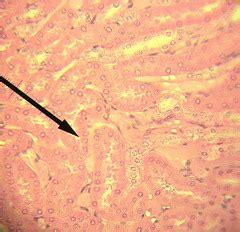 columnar joints form when quizlet a p lab practical 1 flashcards quizlet