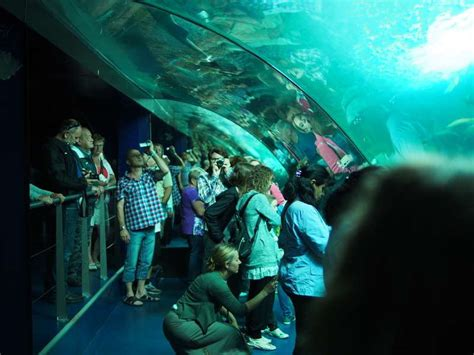 horaires aquarium de 28 images d 233 co aquarium recifal occasion versailles 3111 aquarium