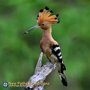 Madagascar Animals and Wildlife