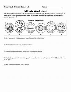 25 Mitosis Review Worksheet Answers