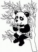 Panda Coloring Bamboo Coloriage Coloriages Animaux Popular sketch template