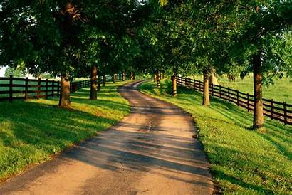 Farm Tree Driveway Lined Entrance Leading Country