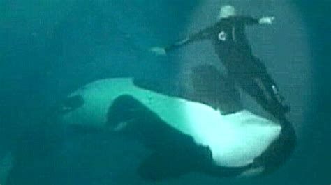 Seaworld Near-fatal Whale Attack Video Released