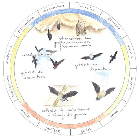 cycle biologique