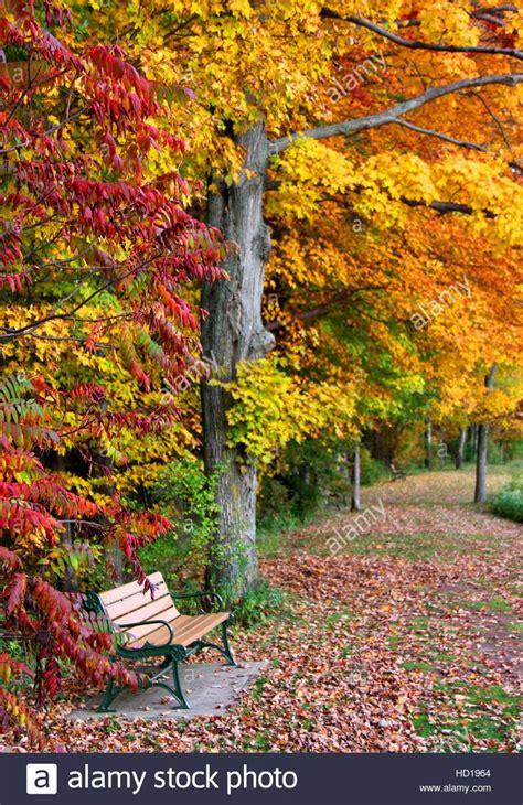 esegui il download di questa immagine stock in autunno una panchina nel parco paesaggio