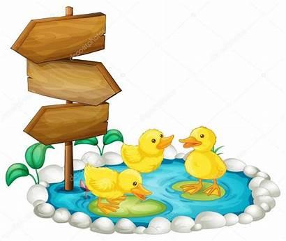 Patos Estanque Pond Wooden Ducks Madera Legno