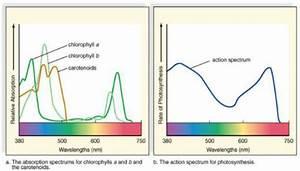 Full Spectrum Led Grow Lights Atop Lighting