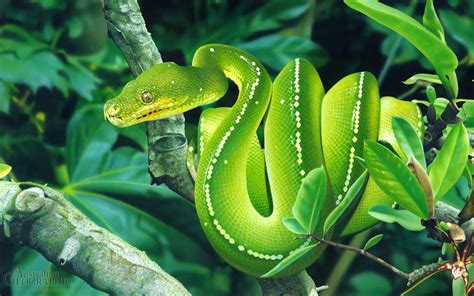15 Pictures - Snakes