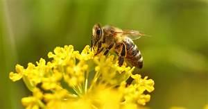 Bienen Und Wespen : wespen und bienen informationen zecken insekten ~ Whattoseeinmadrid.com Haus und Dekorationen
