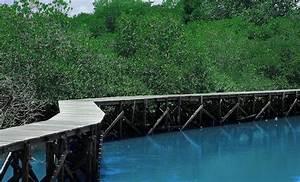 Indonesia Punya  Hutan Mangrove
