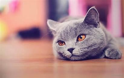 Desktop Cat Wallpapers Funny Animals Widescreen