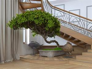 Arbre D Intérieur : arbre de bonsa s l 39 int rieur d 39 une maison priv e avec s d coratif photo stock image 69043746 ~ Preciouscoupons.com Idées de Décoration