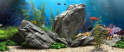 Aquarium 1080p 4k Wallpapers Backgrounds Dream Aquascape