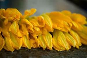 Crunchy Fried Pumpkin Flowers