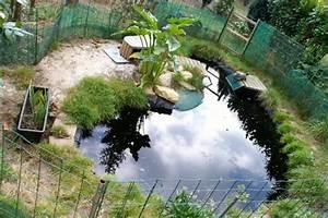 Plante Pour Bassin Extérieur : plante de bassin exterieur ~ Premium-room.com Idées de Décoration