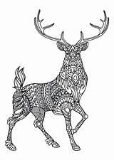 Coloring Pages Deer Hunting Elk Printable Colorings Getcolorings sketch template