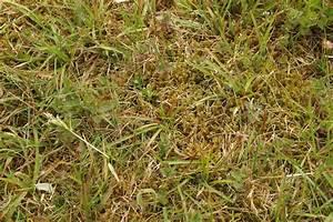 Moos Entfernen Dach : moos und algen von terrasse entfernen algen und moos entfernen auf terrasse und wegen moos ~ Orissabook.com Haus und Dekorationen
