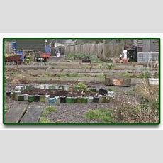 Bbc  Northern Ireland  Gardeners Corner  The Allotment