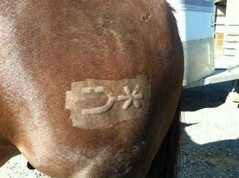lazy spur cattle brands branding iron