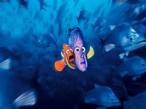 Mr Ray Finding Nemo Quotes. QuotesGram