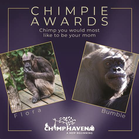 Chimp Youd Most Like To Have As A Mom Chimphaven