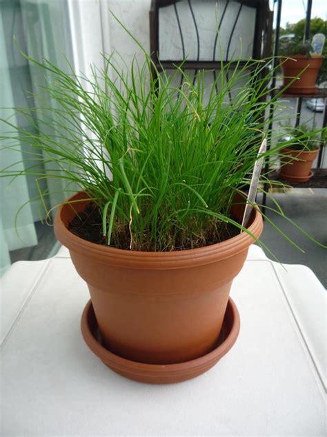 plante anti moustique exterieur plante anti moustique et rem 232 de naturel 15 solutions 233 cologiques