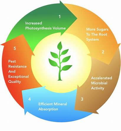 Regenerative Principles Agriculture Ecosystems Developing Science Ag