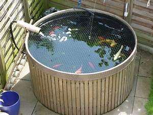 Karpfen Im Gartenteich : tieranzeigen goldfische kleinanzeigen ~ Lizthompson.info Haus und Dekorationen