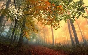Fog, Autumn, Leaves, Vapor, Landscapes, Display, Mist, Color, Path, Nature, View, Forest, Smart