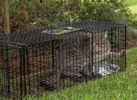 5 Ways You Can Help Feral Cats  The Tigerclub Blog