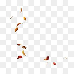 fall leaves png images vector  psd files