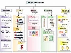 9 Best Nucleic Acids Images On Pinterest